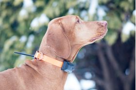 GPS kaelarihm DOG GPS X20 võimaldab jälgida teie koera liikumist kuni 20 kilomeetri kauguselt