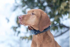 Piipar — liikumise tuvastamine / koera peatamine