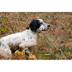 CANIBEEP 5 on väga kasulik jahi käigus, kuid on efektiivne ka koera treenimisel