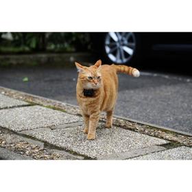 GPS-ошейник для кошек